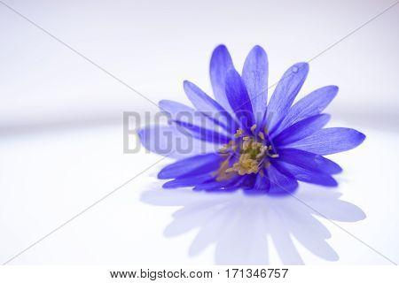 Purple flower floating on light water surface