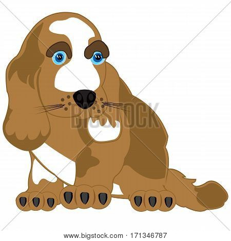 Pets animal dog on white background is insulated
