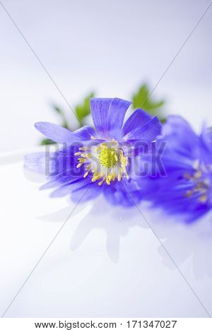 Two Flowers Floating On Light Water Surface