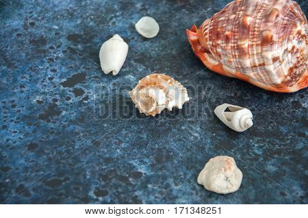 Sea Cockleshells (seachells) Decoration On A Blue Background