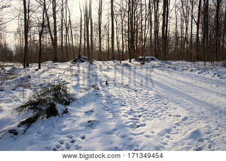 The sun makes shade in snowy forest floor
