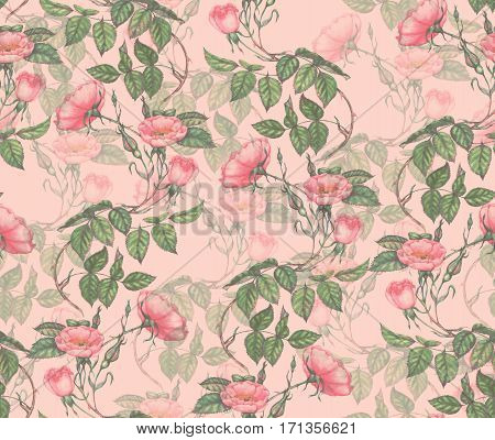 Hand drawn watercolor seamless pattern with pink tender brier flowers
