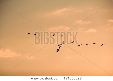 Seagulls flying high with wide spread wings towards light against a blue sky inspirational concept of freedom and aspiration