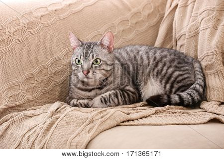 Cute funny cat on plaid at home