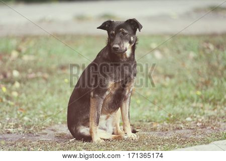 Stray dog sitting on grass outdoors
