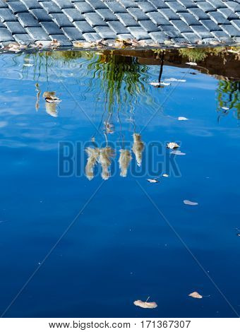 Pampas Grass reflected in blue lake water