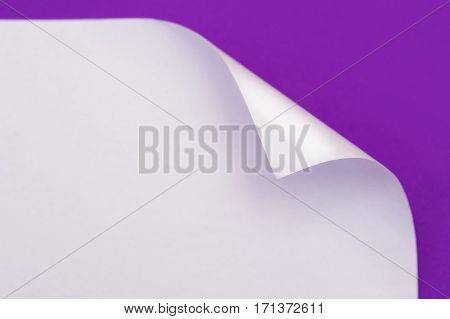 sheet of paper with the wrapped up corner on a purple background.