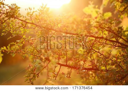 Awakening of spring and the flowering tree nature background at sunset