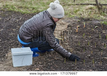 Teen spring planting onions in the garden
