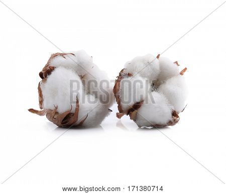 Cotton flower on a white background