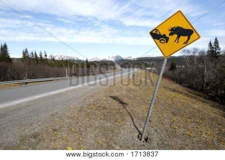 Lookout For Moose