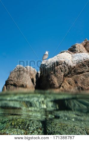 Over-under Image Of Seabird On Rocky Sea Shore