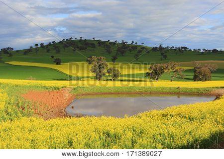 Scenic Farmlands Landscape