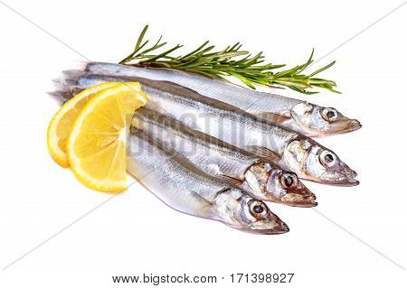 Raw fish capelin and a branch of rosemary lemon slices isolated on white background.