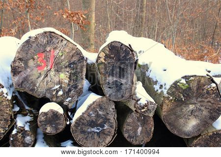Firewood Stack number thirty-one in the forest