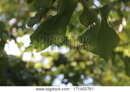 green detail blur leaf greenery tree branch tree