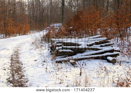 Firewood Stack by snowy forest trail in sunshine