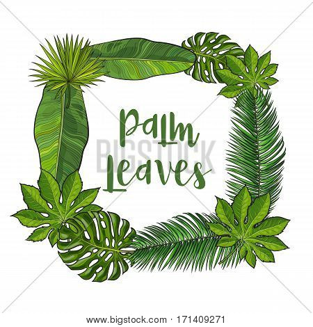 Square frame of tropical palm leaves with place for text, sketch vector illustration isolated on white background. Hand drawn realistic tropical palm leaves as square frame, banner, label design