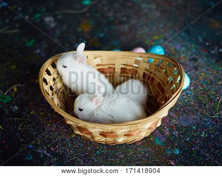 Curious baby-rabbits sitting in basket