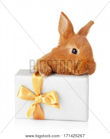 Cute funny rabbit and giftbox on white background