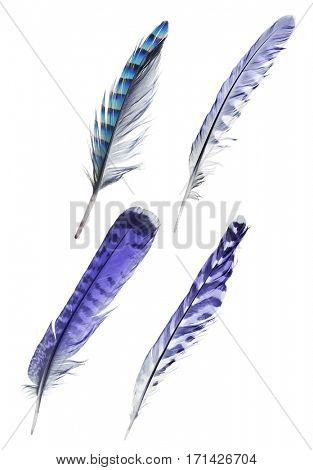 set of four striped feathers isolated on white background