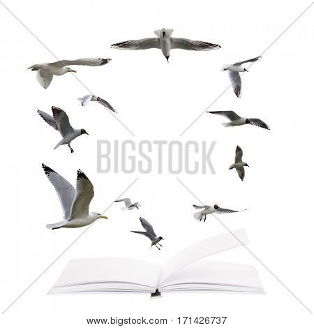 open blank book and flying seagulls  isolated on white background