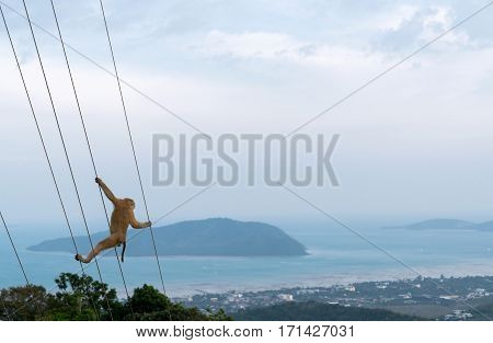 monkey climbs on the stretched ropes on the background of mountains and islands.