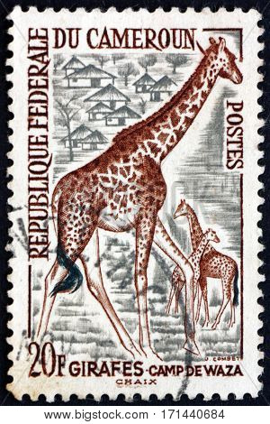 CAMEROON - CIRCA 1977: a stamp printed in Cameroon shows Giraffe giraffa camelopardalis the tallest living terrestrial animal circa 1977