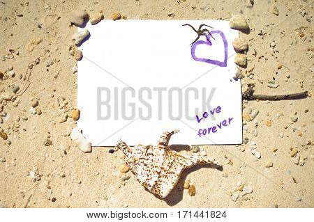 Sea Shell Background With Space For Text. Message From Beach