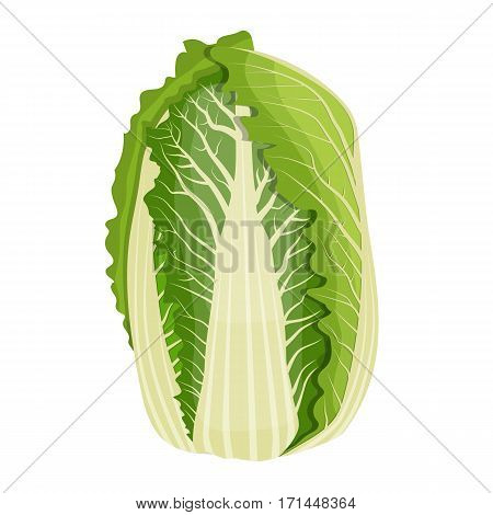 Fresh Chinese cabbage vegetable isolated icon. cabbage for farm market, vegetarian salad recipe design. Organic food. vector illustration in flat style