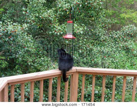 And The Hummingbird