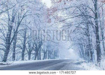 Snow-covered wayside trees. Winter landscape.