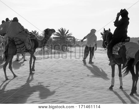 Caravan of camels transporting people at sunset. Bedouins rolled tourists on camels. Black and white.