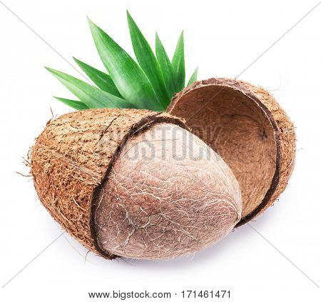 Coconut fruit isolated on a white background.