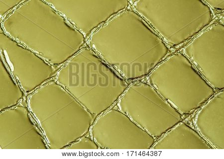 Texture of genuine patent leather close-up, embossed under the skin a reptile. For modern pattern, wallpaper or banner design. With place for your text