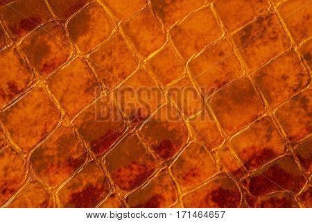 Texture of genuine patent leather close-up, embossed under the skin a brown reptile. For modern pattern, wallpaper or banner design, place for your text