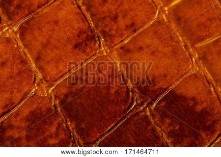 Texture of genuine patent leather close-up, embossed under the skin a dark brown reptile. For modern pattern, wallpaper or banner design. With place for your text