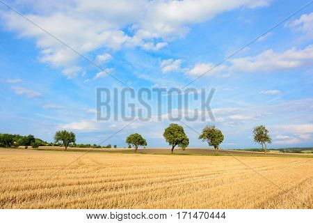 Tree Alley Surrounded By Fields. The Journey To The Mountain Rip.