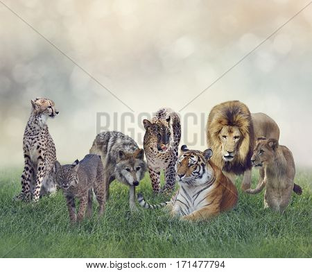 Group of Wild Animals on the Grass