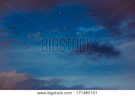 Flock Of Birds Fly In Blue Sky With Rosy Clouds