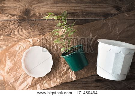 Ficus with flower pot on the wooden background top view
