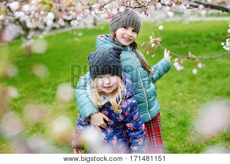 Two Cute Little Sisters Having Fun In Blooming Cherry Garden