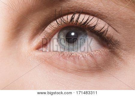 Beautiful Female Grey Eye