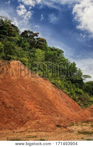 Vertical view of of red ground and many green trees on the edge of rainforest. Copy space