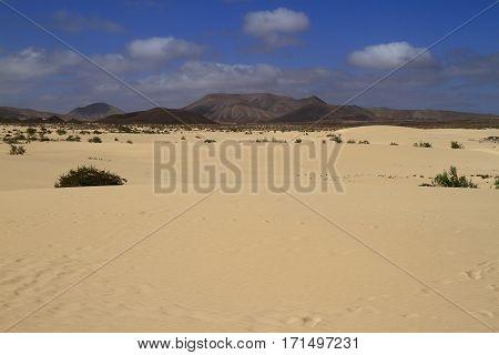 The Dunes of Corralejo Fuerteventura Canary Islands Spain
