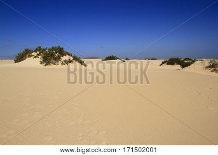 Dunes Of Corralejo, Fuerteventura