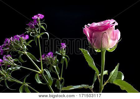 A pink rose is isolated within a small bouquet of flowers.