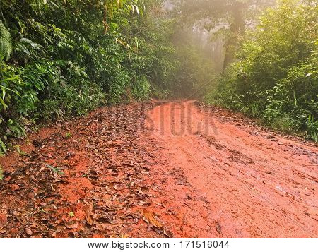 Wet red gravel path full of dried brown Autumn leaves leading to unknown in the tropical forest with mist fog, Thailand