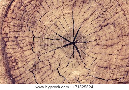Stack of tree stump for background .