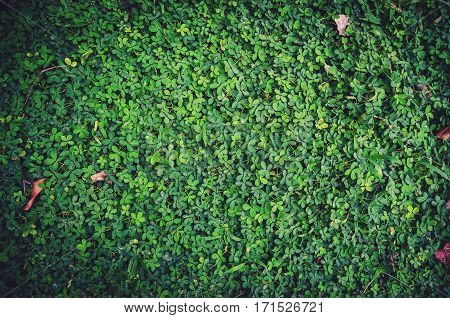Green leaf texture or Leaf texture background